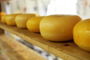 Nicht nur für Käse wie alten Gouda ist Holland bekannt.