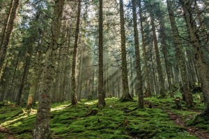 Eines der zahlreichen Wälder in Rumänien.
