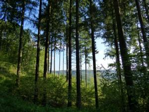 In der Natur kann man frische Luft Tanken in Luxemburg.