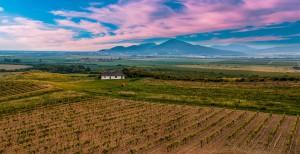 Weinberg in Ungarn. Neben Tourismus und Fischerei ist der Weinanbau in Ungarn von großer Bedeutung für die Wirtschaft.