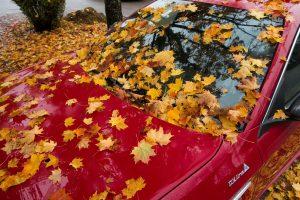 Wer im Herbst unter Bäumen parkt kann bei der Rückkehr viel Laub auf dem Auto vorfinden.