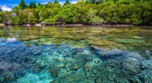 Indonesien bietet wunderschöne Korallenriffe.