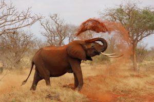 In Kenia kann man auf zahlreiche wilde Tiere treffen.