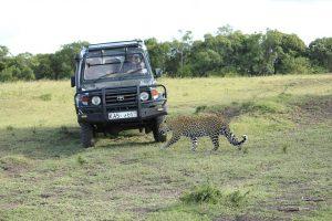 Als Mietwagen in Kenia sollte man einen Geländewagen wählen.