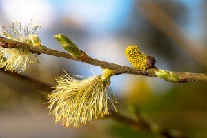 Was man Beseitigen von Pollen beachten sollte.