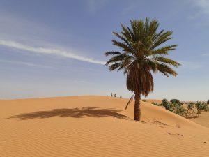 Das Landesbild von Mauretanien wird von Wüste bestimmt.