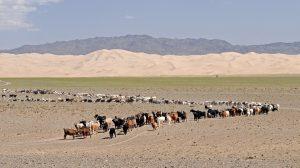 Die Wüste Gobi in der Mongolei.